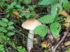 mushroom-mierki