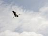stork-mierki