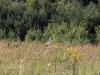 stork-forest-mierki